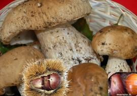 Sagra della castagna e del fungo