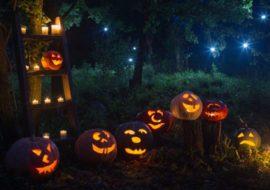 Halloween nel bosco