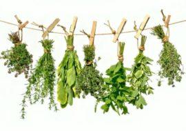 Alla scoperta delle piante spontanee: 2° incontro a Piasco