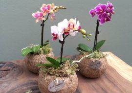 Mostra mercato Flora a Costigliole Saluzzo