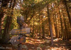 il bosco dell' Alevè