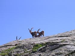 Escursione a cima di Crosa (2531m) e Madonna Alpina (2320 m)