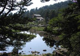 Alevé e il segreto del bosco cembro
