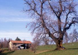Escursione sulle colline di Piasco