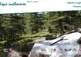 Dante in cammino… nel bosco millenario. Escursione al lago Bagnour